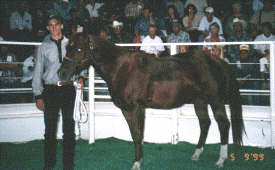 Pick Play - Record Stallion